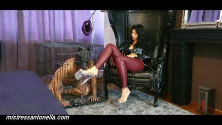 Antonella_-_Gives_Her_Own_Supreme_Caviar_-__Dogtrainingcuscatologo_.mp4.00000.jpg